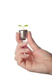 Pplunt growing out of electric light bulb. Eco Stock Image