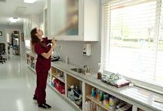 Práctica de un veterinario Fotos de archivo libres de regalías