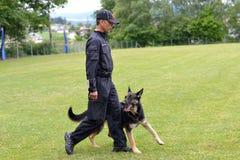 Práticas do instrutor de cão com cão-pastor imagem de stock