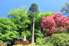 Prächtige Gärten. Stockfotografie