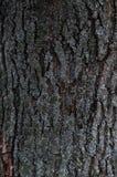 Prägeartige Beschaffenheit der Barke eines Baums Alte hölzerne Baumbeschaffenheits-Mustertapete Ökologie- und Naturkonzepthint lizenzfreie stockfotos