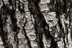 Präglad textur av det bruna skället av ett träd med grön mossa och Arkivfoton