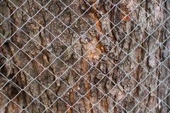 Präglad textur av det bruna skället av ett träd med grön mossa och laven på den Skäll för selektiv fokus Utvidgad rund panorama a Royaltyfria Foton