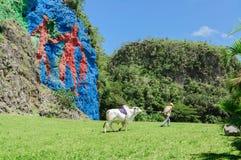 Prähistorische Wand in Vinales Stockfoto