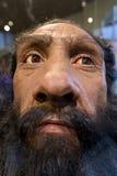 Prähistorischer Mann (Wachsmodell) Stockfotos
