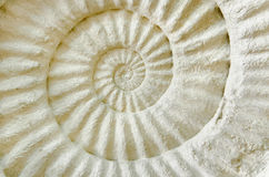 Prähistorisches Fossil des Ammoniten Stockfoto