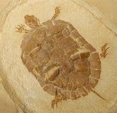 Prähistorisches Schildkröte-Fossil-Baumuster Lizenzfreies Stockfoto