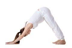 Pränatales Yoga, abwärtsgerichtete Hundeyogahaltung Stockfoto
