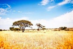 Prärie Kalahari Afrika Arkivfoton