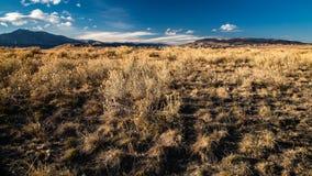 Präriegräs och Rocky Mountains royaltyfri foto
