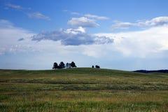 Präriegräs och träd på en kulle i Custer State Park, södra Da royaltyfri foto