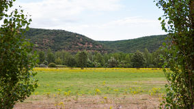Prärielandskap med blommamodellen, träd och kullar Fotografering för Bildbyråer