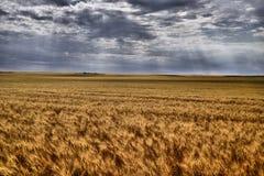 Prärier för kanadensare för kornfält royaltyfri foto
