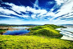 Prärievargkullar Marsh Lands Arkivfoton