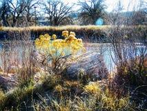 Prärievegetation längs bankerna av Arkansaset River Royaltyfria Bilder