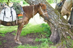 Près d'un support et d'une attente de chevaux d'arbre image stock