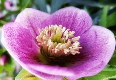 Près d'une fleur Images stock