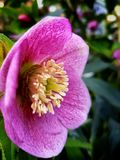 Près d'une fleur Photos libres de droits