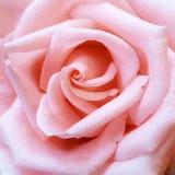 Près d'une fleur Images libres de droits
