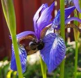 Près d'une fleur Photographie stock