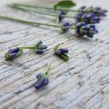 Près d'une fleur Photos stock