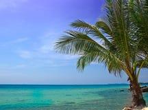 près de l'arbre de mer de paume Photographie stock libre de droits