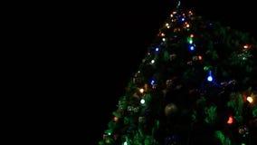 Près de l'arbre de Noël clips vidéos
