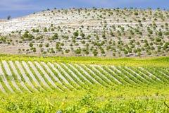 près de la vigne de villabanez Photo stock