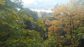 Près des automnes de Multnomah Image stock