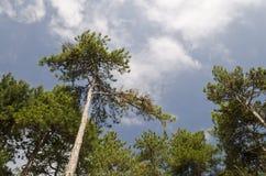 Près des beaux arbres Photo stock