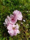 Près des fleurs Images stock