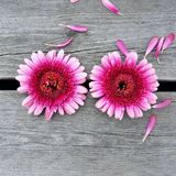 Près des fleurs Photo libre de droits