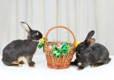Près du beau panier avec des oeufs de pâques reposant deux lapins Images libres de droits