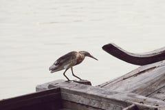 Près du côté Thaïlande de rivière images libres de droits