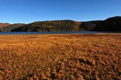 Pré à un lac de paix Images libres de droits