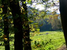 Pré au bord de la forêt avec le sentier de randonnée et le banc photos stock