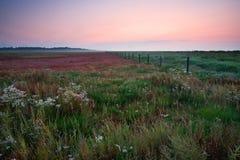 Pré au lever de soleil Image stock