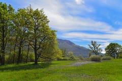 Pré au printemps avec le ciel bleu Photos stock