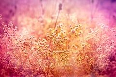 Pré avec beaucoup de fleurs Photographie stock libre de droits
