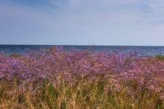 Pré avec de belles fleurs pourpres de limonium ou de lavande de mer sur un fond bleu de mer et de ciel, paysage fleurissant de st images libres de droits