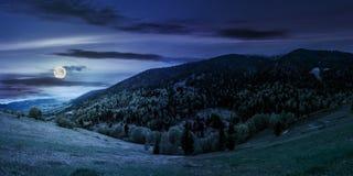 Pré avec des arbres en montagnes la nuit photos libres de droits