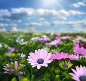 Pré avec des fleurs Images libres de droits