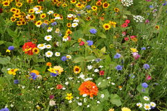 Pré avec des fleurs d'été Photographie stock libre de droits