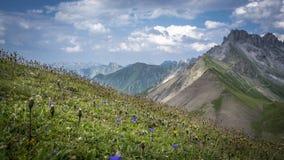 Pré avec des fleurs dans des Alpes d'Allgau Image libre de droits