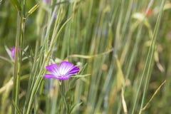 Pré avec des fleurs de ressort Image stock