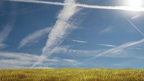 Pré avec l'herbe et le ciel bleu Image libre de droits