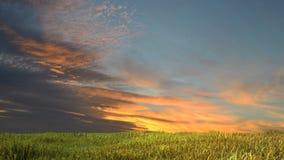Pré avec l'herbe et le ciel bleu Photographie stock