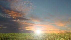 Pré avec l'herbe et le ciel bleu Images libres de droits
