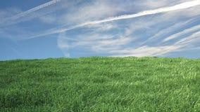 Pré avec l'herbe et le ciel bleu Photos stock