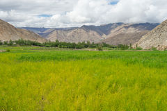 Pré chez Leh, Ladakh Photographie stock